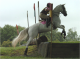 Eventing paarden Sport Horse for Adoption